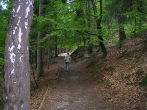 Дорога к Вальдтштайну