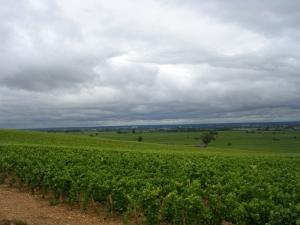 Виноградные просторы Бургундии