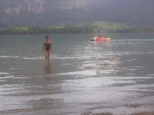 Купание на озере с лебедями