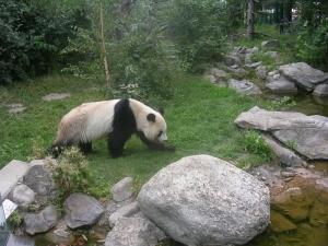 Шонбрунн зоопарк