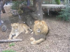 Шобрунн зоопарк