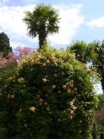Никитский ботанический