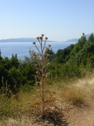 """Вот такие """"деревья"""" можно найти немного выше моря"""