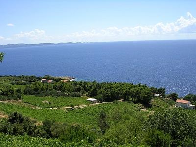 Деревня Borak и виноград Dingac
