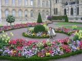 Цветы, кругом цветы